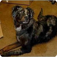 Adopt A Pet :: Roper - Arlington, TX