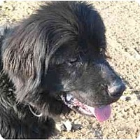 Adopt A Pet :: Priscilla - Harrisburgh, PA