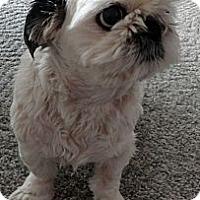 Adopt A Pet :: Gavon - Toronto, ON