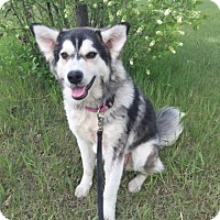 Adopt A Pet :: Diefenbaker - Saskatoon, SK