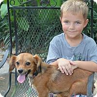 Adopt A Pet :: Buffy - Daleville, AL