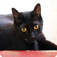 Adopt A Pet :: Zara - Tucson, AZ