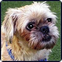 Adopt A Pet :: OTIS in Los Angeles, CA - Seymour, MO
