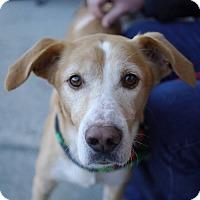 Adopt A Pet :: Smiley - Fairfax, VA