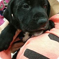 Adopt A Pet :: Magic - Ogden, UT