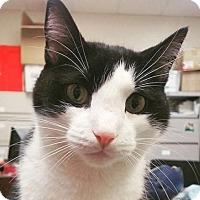 Adopt A Pet :: *Jinxy* - Philadelphia, PA