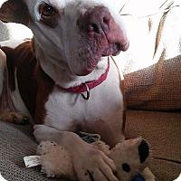 Adopt A Pet :: Daysee - Hanover, PA