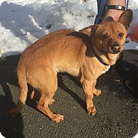 Adopt A Pet :: Beets - Bloomfield, CT