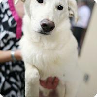 Adopt A Pet :: Snowman - Appleton, WI