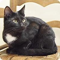 Adopt A Pet :: Bradley - Homewood, AL