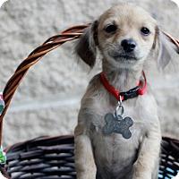 Adopt A Pet :: Salisbury - Norwalk, CT