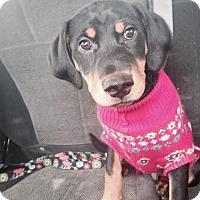 Adopt A Pet :: Prince - Buffalo, MN
