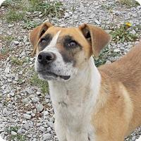 Adopt A Pet :: Luna - Lewisburg, TN