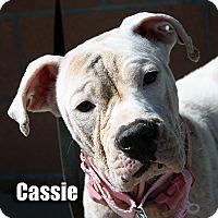 Adopt A Pet :: Cassie - Encino, CA