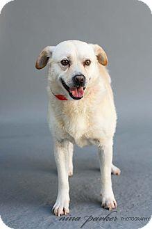 Labrador Retriever Mix Dog for adoption in Marietta, Georgia - Wolfgang