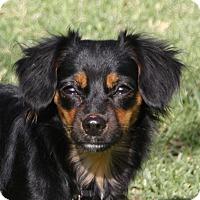Adopt A Pet :: Rick - Edmonton, AB