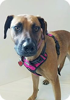 Hound (Unknown Type) Mix Dog for adoption in Elyria, Ohio - Coco