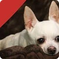 Adopt A Pet :: Sparky - Roanoke, VA