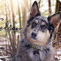 Adopt A Pet :: Woodson - Joliet, IL