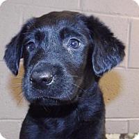 Adopt A Pet :: Buck - Oxford, MS