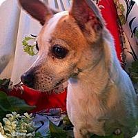 Adopt A Pet :: Cakes - Cumberland, MD