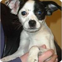 Adopt A Pet :: Maddie - Douglas, MA