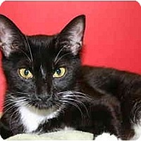 Adopt A Pet :: JUDY - SILVER SPRING, MD