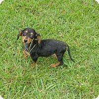 Adopt A Pet :: Heidi - Raleigh, NC