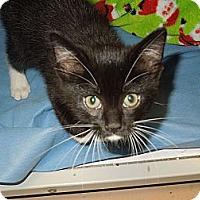 Adopt A Pet :: Avery - Medina, OH