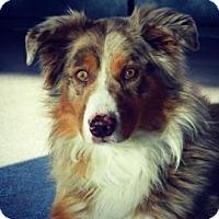 Adopt A Pet :: Bindi - Cheyenne, WY