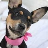 Adopt A Pet :: ZOEY!! - san diego, CA