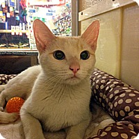 Adopt A Pet :: Bridget - Irvine, CA