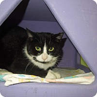 Adopt A Pet :: Collette - Medina, OH