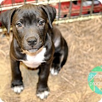 Adopt A Pet :: Fred Weasley - Gainesville, FL