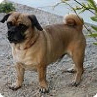 Adopt A Pet :: Buster - Pismo Beach, CA