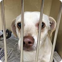 Adopt A Pet :: Skipper - Visalia, CA