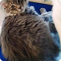 Adopt A Pet :: Geoffrey - Geneseo, IL