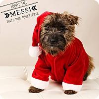 Adopt A Pet :: Messi - Omaha, NE