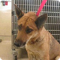 Adopt A Pet :: A1250438 is in Danger in Riverside - Beverly Hills, CA