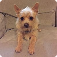 Adopt A Pet :: Doc McStuffins - Vacaville, CA