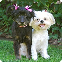 Adopt A Pet :: LORELEI & RORI - Los Angeles, CA