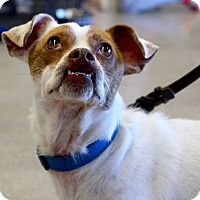 Adopt A Pet :: Humphrey - Roanoke, VA