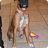 Adopt A Pet :: Serena - Hurst, TX