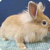 Adopt A Pet :: A440662 - Upper Marlboro, MD