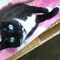 Adopt A Pet :: Meeka - Naples, FL