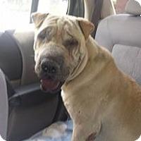Adopt A Pet :: Sherman - pending - Mira Loma, CA