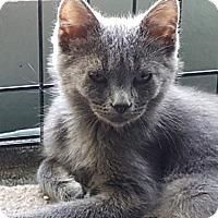 Adopt A Pet :: Grayson - Pasadena, CA