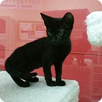 Adopt A Pet :: Abbie - Phoenix, AZ