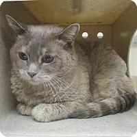 Adopt A Pet :: ABBY - Reno, NV