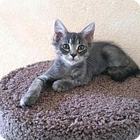 Adopt A Pet :: Ben - Upland, CA